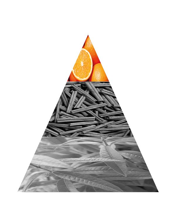 PIRAMIDE OLFATTIVA PLASIR AGRUMES